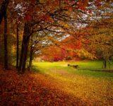 紅葉が一番綺麗な場所は?人気は、1位 磐梯、2位、白馬・小谷、3位 上高地、4位 定山渓、5位 層雲峡